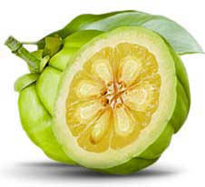 Garcinia cambogia found in the Pina Colada Diet