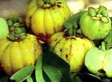 What is garcinia cambogia