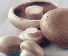 does the mushroom diet really work