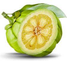 Garcinia cambogia found in the Pina Colada Diet